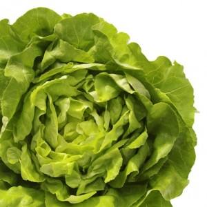 lettuce_530_530